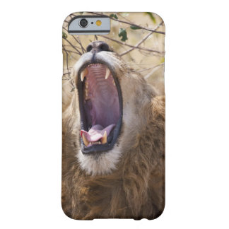 León masculino (Panthera leo) que bosteza, Masai Funda Barely There iPhone 6