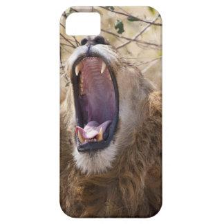 León masculino (Panthera leo) que bosteza, Masai Funda Para iPhone SE/5/5s