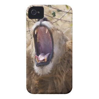 León masculino (Panthera leo) que bosteza, Masai M iPhone 4 Case-Mate Cobertura