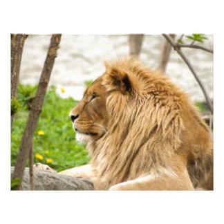 León masculino que descansa en hierba membretes personalizados