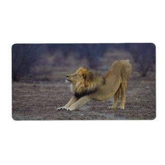 León masculino que estira la yoga de Leo del Panth Etiquetas De Envío