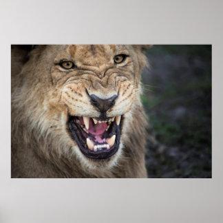León masculino que gruñe, ascendente cercano póster