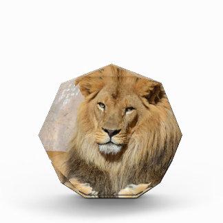 León masculino
