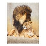 León masculino y femenino en amor impresiones en lona estiradas