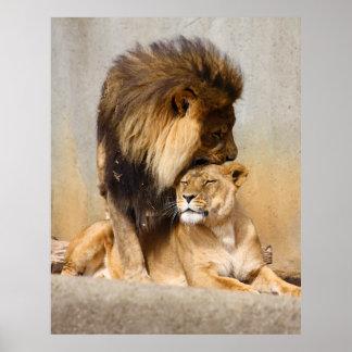 León masculino y femenino en amor impresiones
