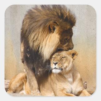 León masculino y femenino en amor calcomanía cuadrada personalizada