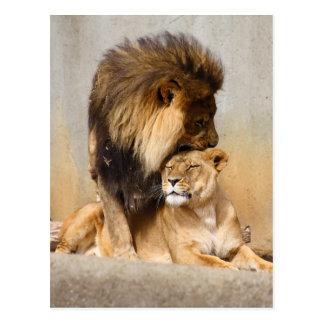 León masculino y femenino en amor postal