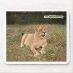 León Mousepad de Barbary Alfombrillas De Ratones