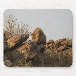 León namibiano alfombrillas de raton