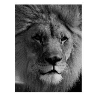 León negro y blanco postales