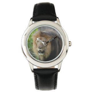 León orgulloso reloj