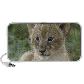León, Panthera africanos leo), Tanzania, Portátil Altavoces