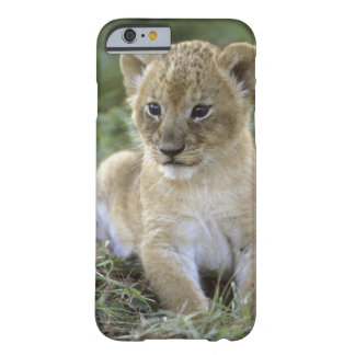 León, Panthera africanos leo), Tanzania, Funda Barely There iPhone 6