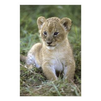 León Panthera africanos leo Tanzania Fotografías