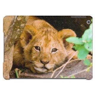 León (Panthera Leo) Cub en la cueva, Maasai Mara Funda Para iPad Air