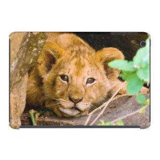 León (Panthera Leo) Cub en la cueva, Maasai Mara Funda Para iPad Mini Retina
