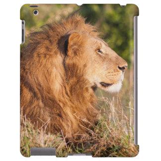 León (Panthera Leo) Maasai Mara, Kenia, África Funda Para iPad