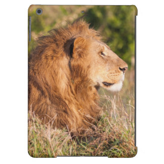 León (Panthera Leo) Maasai Mara, Kenia, África Funda Para iPad Air