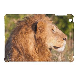 León (Panthera Leo) Maasai Mara, Kenia, África