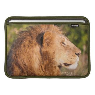 León (Panthera Leo) Maasai Mara, Kenia, África Funda Para Macbook Air