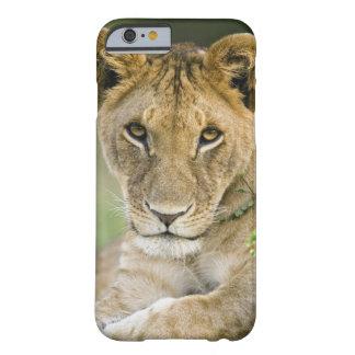 León, Panthera leo, Masai Mara, Kenia Funda Barely There iPhone 6