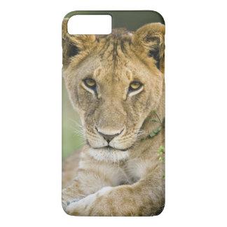León, Panthera leo, Masai Mara, Kenia Funda iPhone 7 Plus