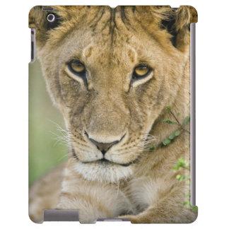 León, Panthera leo, Masai Mara, Kenia Funda Para iPad