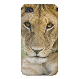 León, Panthera leo, Masai Mara, Kenia iPhone 4/4S Carcasa