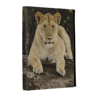León, Panthera leo, parque nacional de Serengeti,