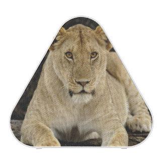 León, Panthera leo, parque nacional de Serengeti, Altavoz