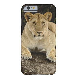 León, Panthera leo, parque nacional de Serengeti, Funda Barely There iPhone 6