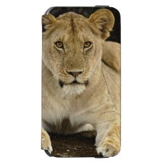 León, Panthera leo, parque nacional de Serengeti, Funda Billetera Para iPhone 6 Watson