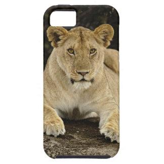 León, Panthera leo, parque nacional de Serengeti, Funda Para iPhone SE/5/5s