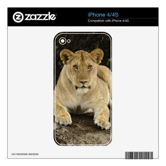 León, Panthera leo, parque nacional de Serengeti, iPhone 4 Skin