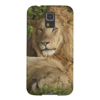 León, Panthera leo, reclinación de los varones Carcasa Galaxy S5