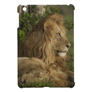 León, Panthera leo, una Mara más baja, Masai Mara