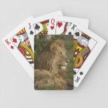 León, Panthera leo, una Mara más baja, Masai Mara Barajas De Cartas