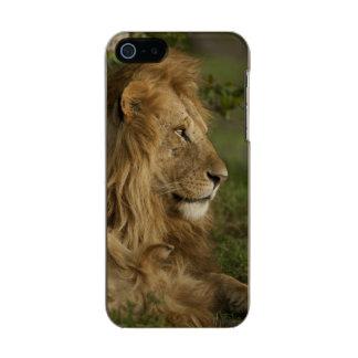 León, Panthera leo, una Mara más baja, Masai Mara Carcasa De Iphone 5 Incipio Feather Shine