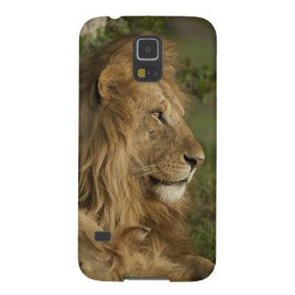 León, Panthera leo, una Mara más baja, Masai Mara Carcasas Para Galaxy S5