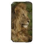 León, Panthera leo, una Mara más baja, Masai Mara Funda Billetera Para iPhone 6 Watson