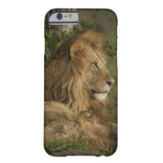 León, Panthera leo, una Mara más baja, Masai Mara Funda De iPhone 6 Barely There