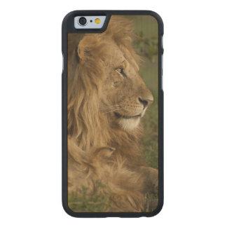 León, Panthera leo, una Mara más baja, Masai Mara Funda De iPhone 6 Carved® De Arce