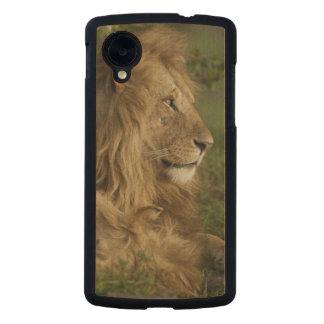 León, Panthera leo, una Mara más baja, Masai Mara Funda De Nexus 5 Carved® Slim De Arce