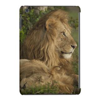 León, Panthera leo, una Mara más baja, Masai Mara Funda Para iPad Mini Retina