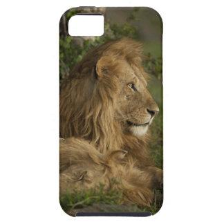 León, Panthera leo, una Mara más baja, Masai Mara Funda Para iPhone 5 Tough