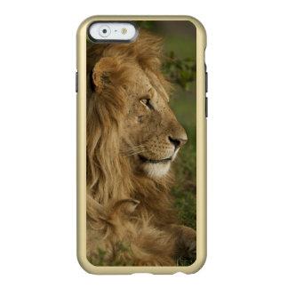 León, Panthera leo, una Mara más baja, Masai Mara Funda Para iPhone 6 Plus Incipio Feather Shine