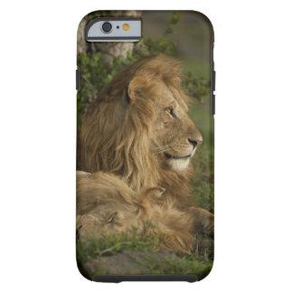 León, Panthera leo, una Mara más baja, Masai Mara Funda Para iPhone 6 Tough