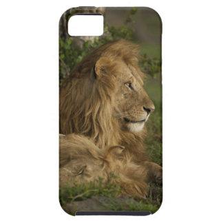 León, Panthera leo, una Mara más baja, Masai Mara Funda Para iPhone SE/5/5s