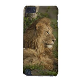 León, Panthera leo, una Mara más baja, Masai Mara  Funda Para iPod Touch 5G