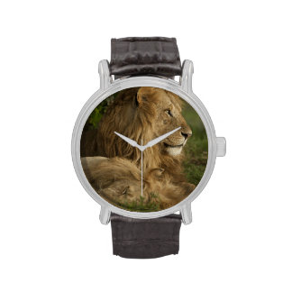 León, Panthera leo, una Mara más baja, Masai Mara  Relojes De Mano